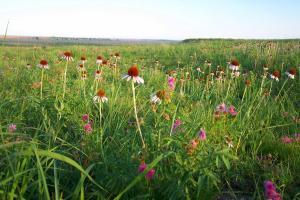 prairie_flowers
